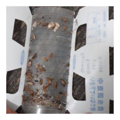 Jasa basmi hama kecoa - cara membasmi kecoa - lem kecoa (4b)